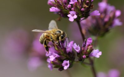 Bee Day buzzes at Mompesson House