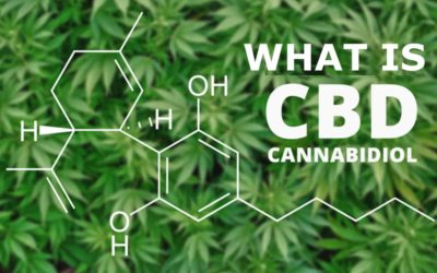 Cannabidiol – What's all the Fuss About?
