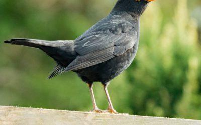 Take care of garden birds