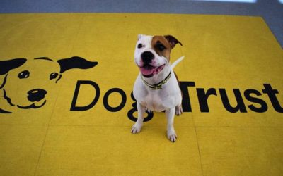 Dogs Trust lays crisis plans