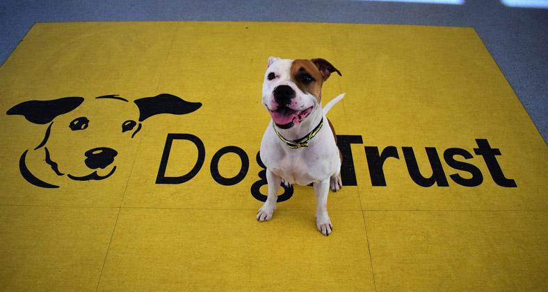 Dogs Trust advice to owners