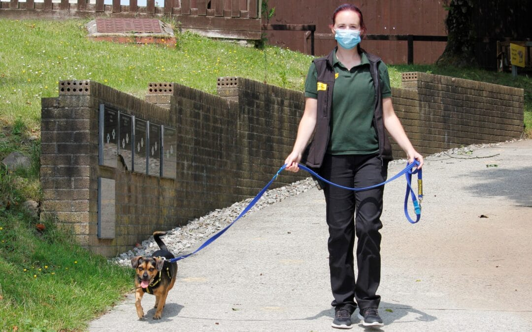 Helping dogs adjust to masks