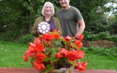 'Begonias bloom again