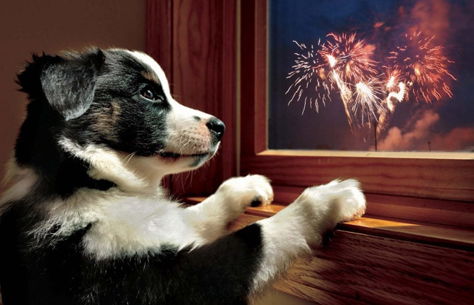 Dog owners urged to plan ahead for firework disturbances