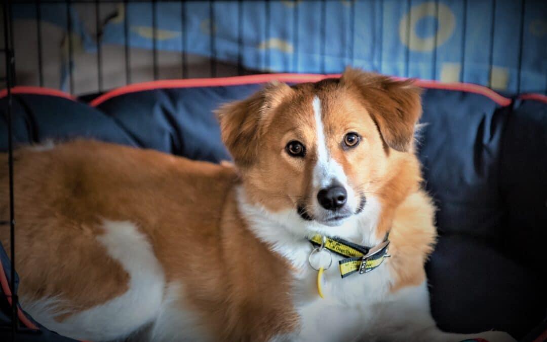 Dog on a lead plea for lambing season
