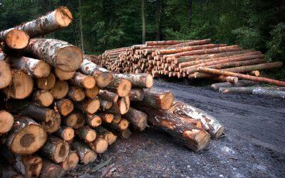 Tree-felling inquiry