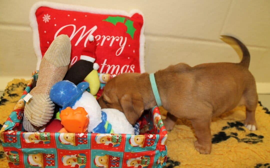 Keeping your dog safe this Christmas