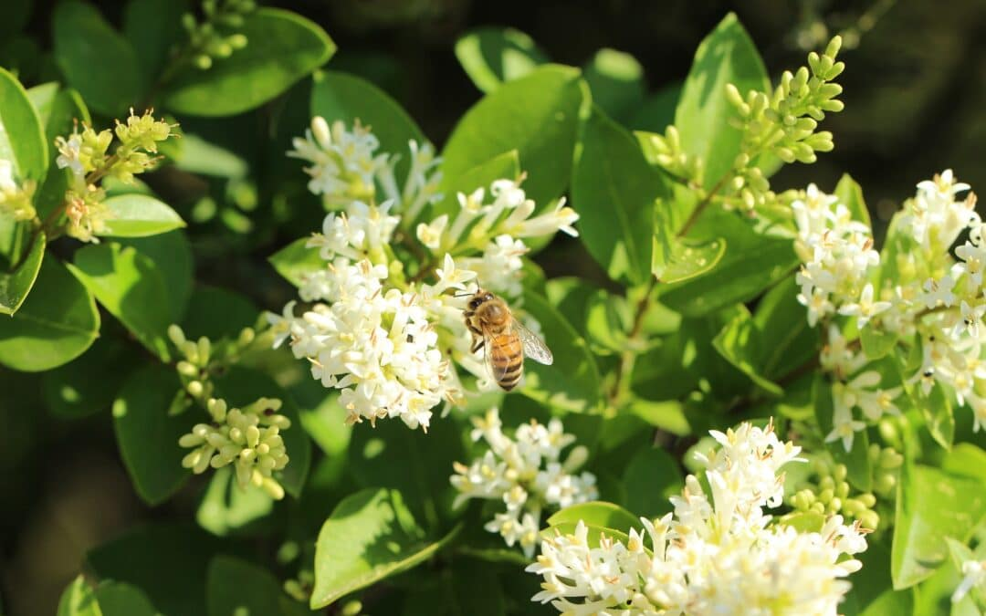 The health benefits of propolis