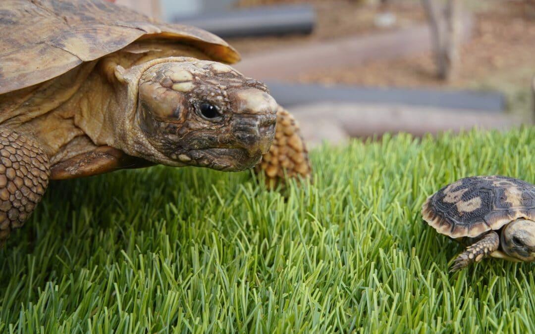 Flat pack tortoises take a flip
