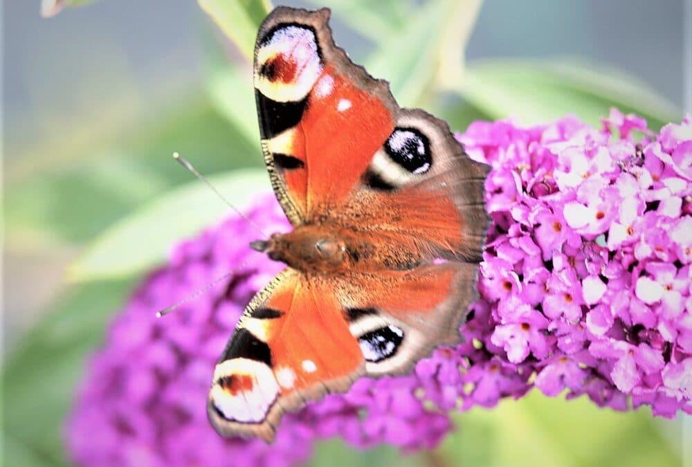 Watch the butterflies flutter by
